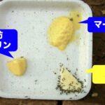 【実験してみた】アリはトランス脂肪酸で危険なマーガリンを本当に食べないのか?